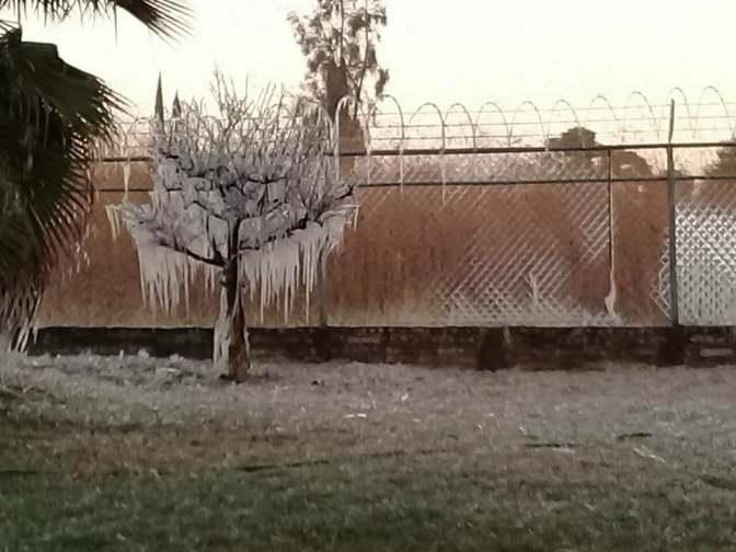 Por frío, se congelan árboles y calles en La Piedad