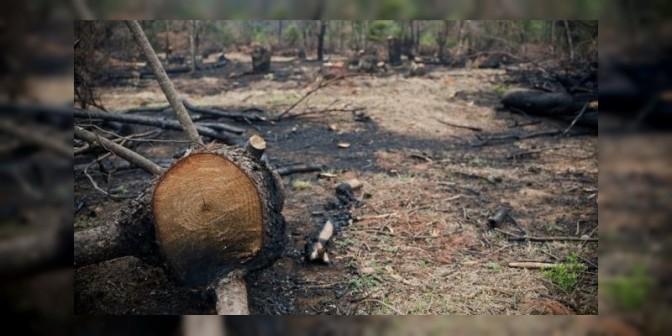 Identifica PROAM a diputados priistas tala montes; plantan aguacate ilegal en Morelia