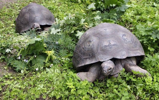 ¿Por qué las tortugas pueden vivir más de 100 años?